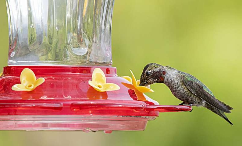 Feeder for Hummingbirds